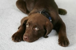 Keeping Your Carpet Looking Spotless