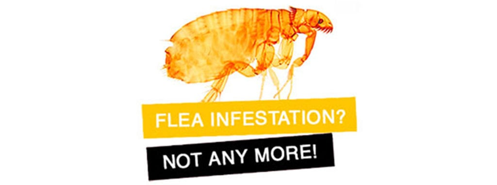 Pest Management and Control Flea Treatment Banner
