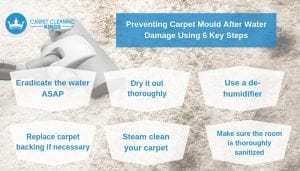 Preventing Carpet Mould After Water Damage Using 6 Key Steps (1)