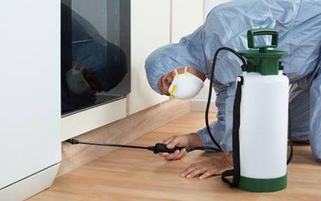 Spraying pest control chemical