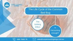 The Life Cycle of the Common Bed Bug