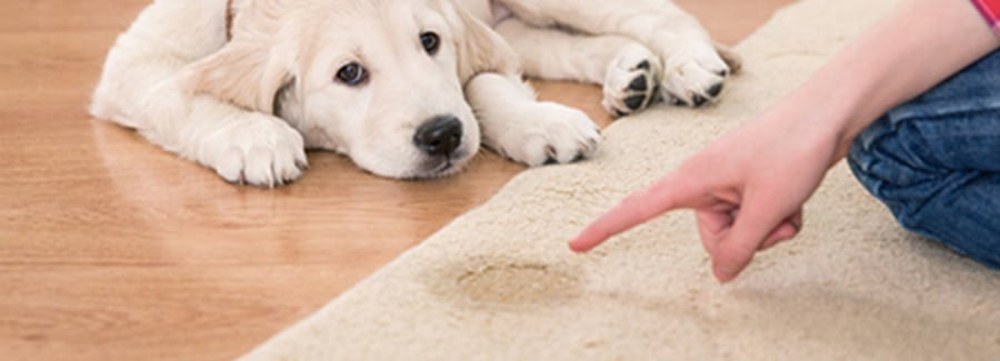 Urine Treatment Carpet Cleaning Kings banner