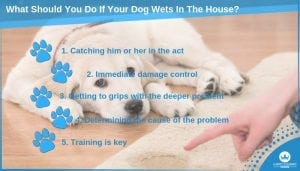What Should You Do If Your Dog Wets In The House_