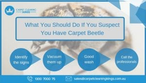 What You Should Do If You Suspect You Have Carpet Beetle