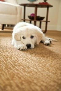 Carpet Cleaning With Pets