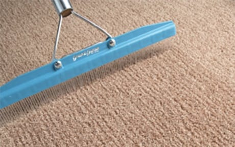 Carpet Cleaning Kings Grooming after carpet cleaning