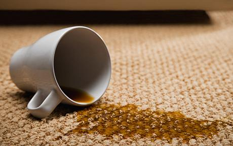 Carpet Cleaning Kings Stain Treatment