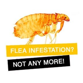 flea treatment pest control service