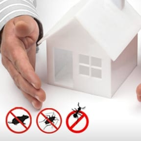 general pest control services