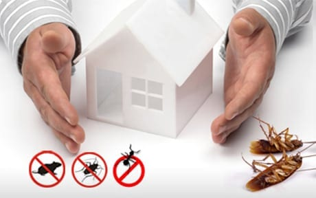 general-pest-control-services