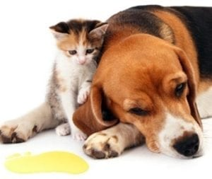Manage Pet Odours