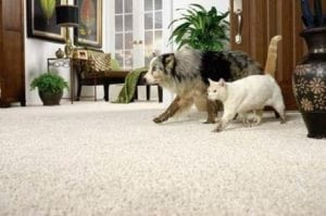 Pets on the Carpet