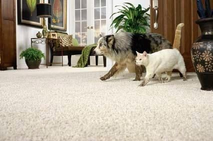 Pets on the Carpet