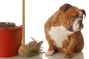 Remove Pet stains And Hair From Your Carpets?