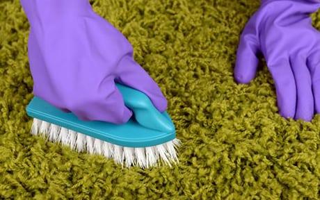 scrubbing a urine stain