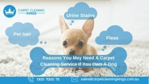 Reasons You May Need A Carpet Cleaning Service If You Own A Dog