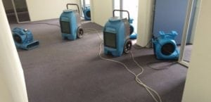 Wet Carpet – The Importance Of Drying It Quickly