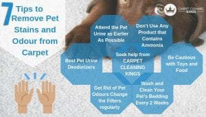 Best 7 Tips to Remove Pet Stains and Odour from Carpet